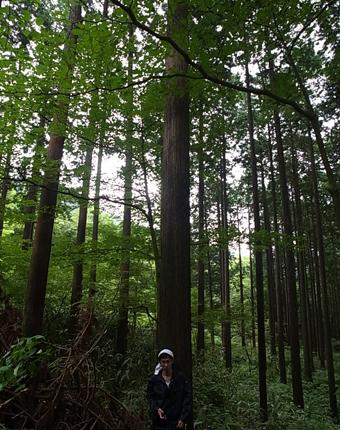 nhouse_hinokikengaku4